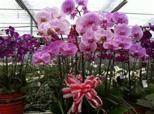 Bunga Anggrek Langka Terancam Punah Tanamananggrekk